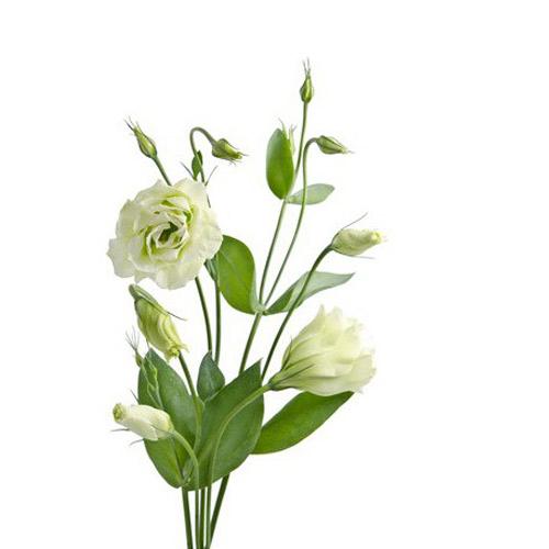 lisianthus fleur bouquet